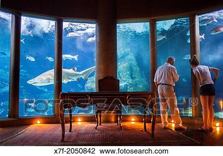 Archivio fotografico toro squalo in acquario finisterrae casa de los peces nautilus - Acquario x casa ...