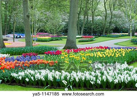 stock bild kleingarten ansicht von colorfull keukenhof tulpenbl te blume park in dass. Black Bedroom Furniture Sets. Home Design Ideas