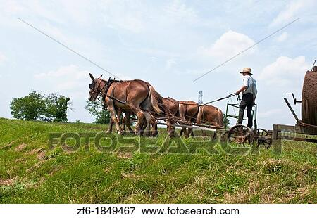 of Amish man in old fashioned horse carriage on street in Intercourse ...
