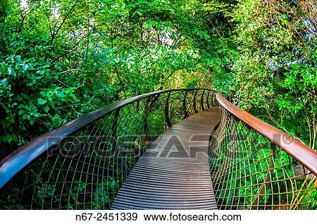 Stock Photograph - Tree Canopy Walkway Kirstenbosch National Botanical Garden Cape Town South & Stock Photograph of Tree Canopy Walkway Kirstenbosch National ...