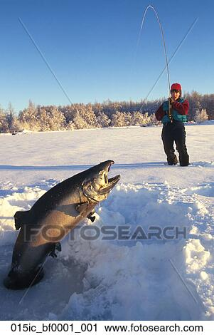 Stock photography of woman ice fishing catches king salmon for Otter ice fishing