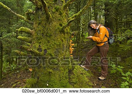 Stock photo of female hiker examines tree mushrooms while for Abercrombie mural