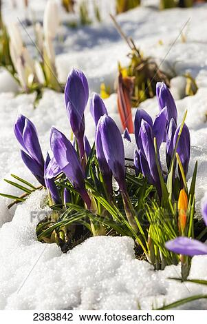 Résultat d'images pour image de fleur sur la neige