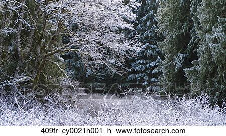 Banque de photo givre et lumi re neige couverture for Couverture plante hiver