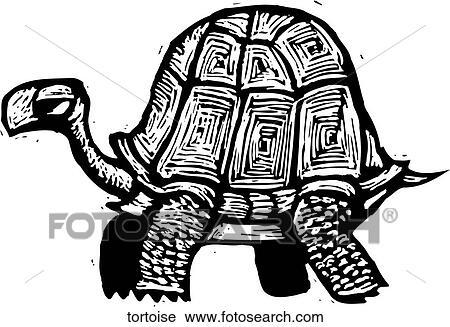 Clipart tortue tortoise recherchez des clip arts des illustrations des dessins et des - Clipart tortue ...