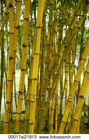 Stock Photo Of Trunks Of Bamboo Plants Chinese Garden Singapore 00017ai21813 Search Stock