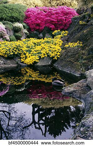 Stock photo of a duck in a pond with flowers reflected in for Duck pond mural