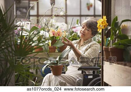 banque de photo personne agee femme asiatique dans fauteuil roulant dans serre. Black Bedroom Furniture Sets. Home Design Ideas