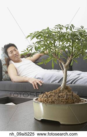 banque d 39 image homme asiatique regarder arbre bonzaies nh 09ai5225 recherchez des photos. Black Bedroom Furniture Sets. Home Design Ideas