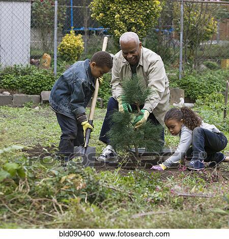 banques de photographies grand p re et petits enfants planter arbre ensemble bld090400. Black Bedroom Furniture Sets. Home Design Ideas