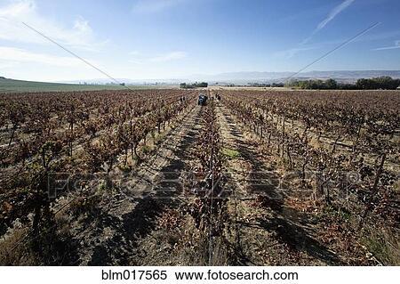 Field Crops Clipart Stock Image Empty Crop Field