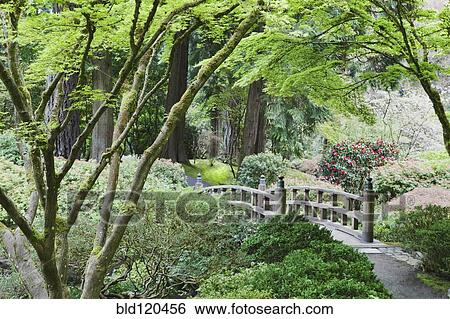 Stock images of wooden bridge in japanese garden portland oregon united states bld120456 for Portland japanese garden free day