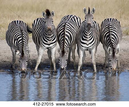 Image result for the watering hole clipart