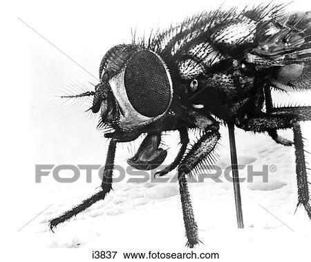 Beeld bovenmatige voorgrond van huis vliegen insect op brood i3837 zoek stock - Beeld van eigentijds huis ...
