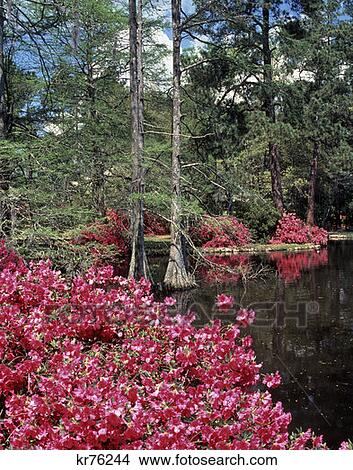 Stock photo of swan lake gardens south carolina kr76244 for Cypress gardens mural