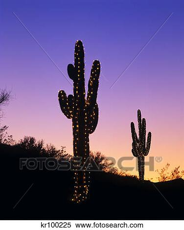 Stock Image of Saguaro Cactus Decorated With Christmas Lights ...