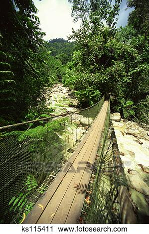 Stock Photography - Tree top canopy walk 100ft high in rainforest Sabah Malaysia & Stock Photography of Tree top canopy walk 100ft high in ...