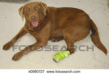 Picture of a hurt dog k0060727 search stock photography for Bloody bay wall mural