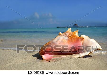 Banque d'Image - plage, conque. Fotosearch - Recherchez des Photos, des Images, des Photographies et des Clip Arts
