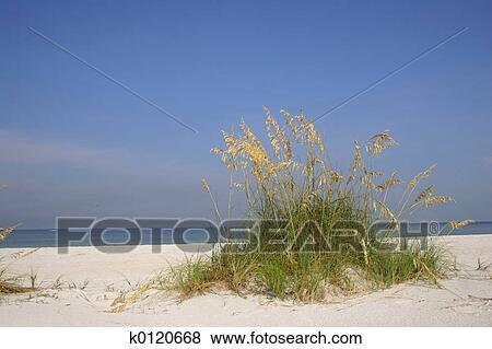 Immagini avena mare k0120668 cerca archivi fotografici for Disegni di casa sulla spiaggia tropicale