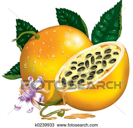 绘图 激怒水果