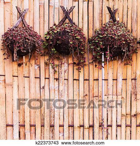 Banco de imagem bambu plantas para pendurar parede - Bambu planta exterior ...