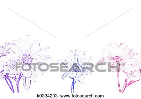 Drawing - Art Illustration Shasta Moon Daisy  Fotosearch - Search    Leucanthemum Vulgare Drawing
