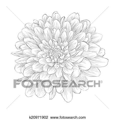 clipart - beau, monochrome, noir blanc, dahlia, fleur, isolé