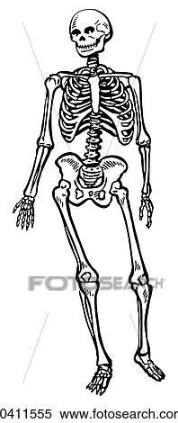 banque d 39 illustrations squelette humain k0411555 recherche de cliparts de dessins d. Black Bedroom Furniture Sets. Home Design Ideas