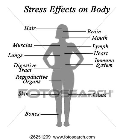 a report on stress and its effects on the body It generally takes some time for the body to calm down after the stress protects them from the negative effects of stress while delivering its positive effects.