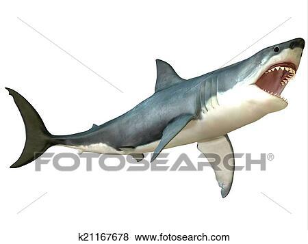 Archivio illustrazioni gran squalo bianco attacco for Disegno squalo bianco