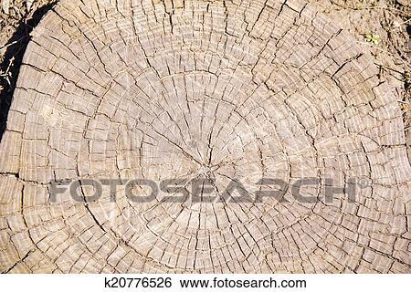 茎的结构示意图
