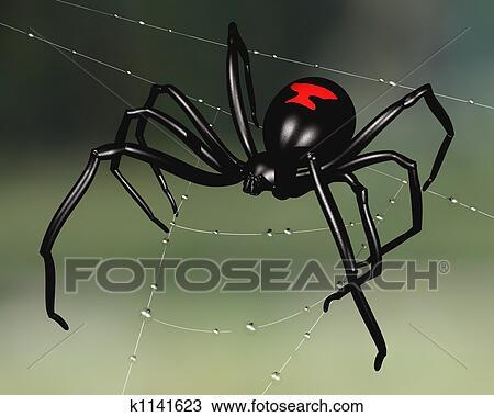 spider web with dew clip art