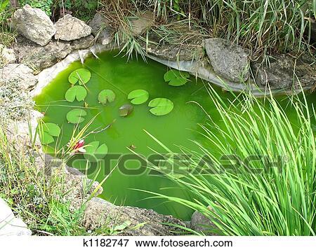 Image peu d coratif jardin tang comme landscaping for Element decoratif jardin