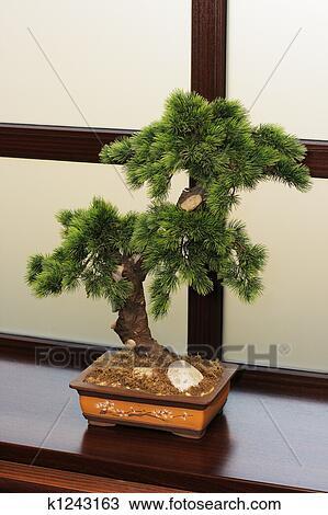Archivio fotografico il giapponese dwarfish pino for Finestra giapponese