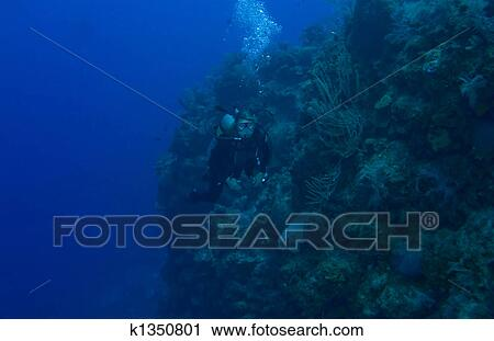 Stock photography of diver off bloody bay wall k1350801 for Bloody bay wall mural