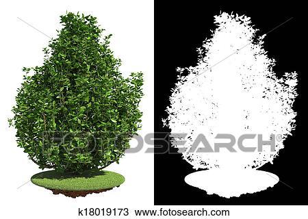 Bush Drawings Drawing Green Bush With