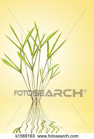 手绘图 - 竹子, 叶子,