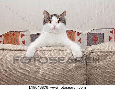 stock bilder wei e katze mit grau flecke sitzt in verwunderung sehen kissen inmitten. Black Bedroom Furniture Sets. Home Design Ideas