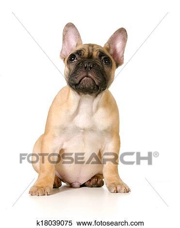 小狗面具制作图片