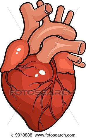 Clip Art of Human Heart k19078888 - Search Clipart ...