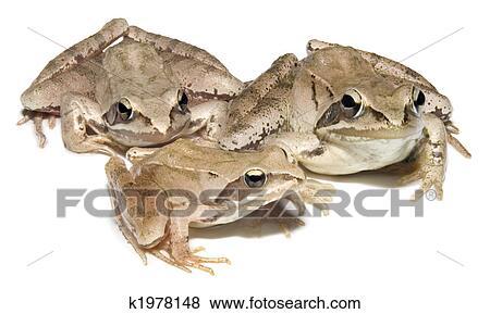 蛙抓出池:蛙卵孵化后70天左右变 蝎牛和泥鳅等,2个月