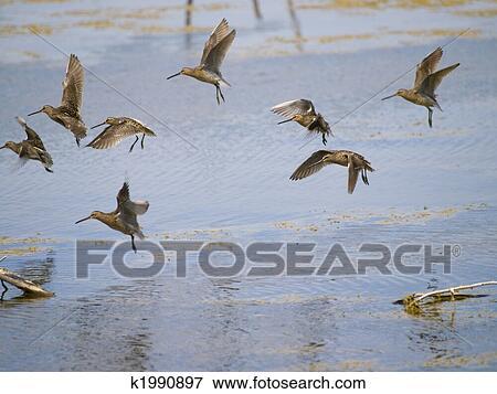 Image commun b cassine oiseau groupe b k1990897 for Oiseau commun