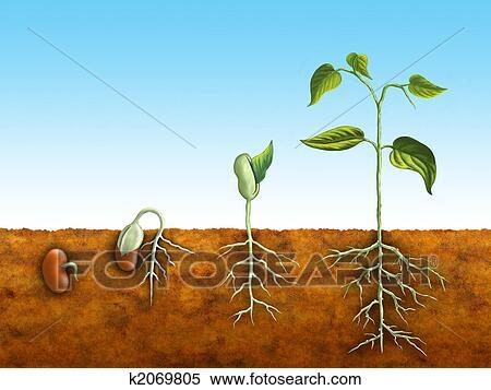 Seeds Clip Clip Art Seed Germination
