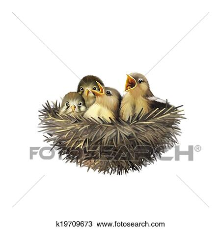 zeichnung vier hungrig baby spatzen in a nest k19709673 suche clipart illustration. Black Bedroom Furniture Sets. Home Design Ideas