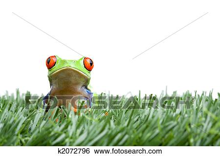stock bilder rotaugenlaubfrosch in gras freigestellt k2072796 suche stockfotografie. Black Bedroom Furniture Sets. Home Design Ideas