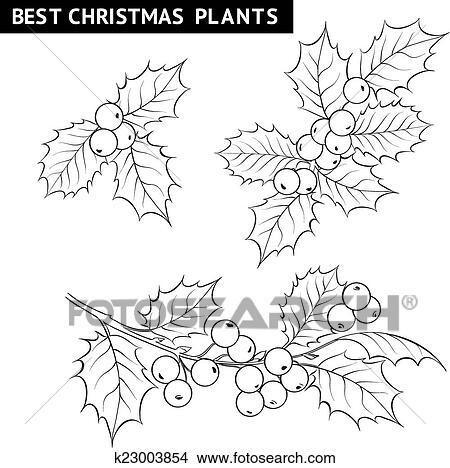 clipart weihnachten mistel zweig drawing k23003854. Black Bedroom Furniture Sets. Home Design Ideas