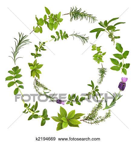 herbal medicine herbs