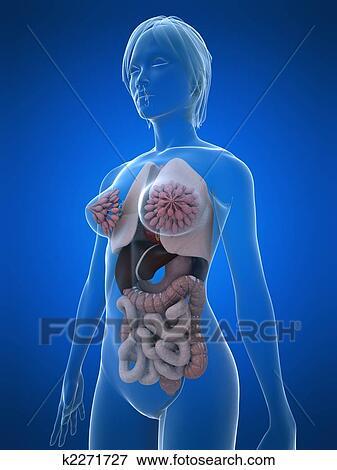 женский изъянполовых органов фото