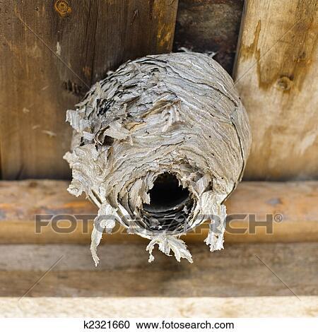 arquivos de fotografia vespas ninho k2321660 busca de fotos imagens murais de parede e. Black Bedroom Furniture Sets. Home Design Ideas